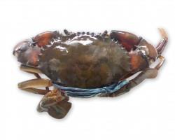 Crab 肉蟹