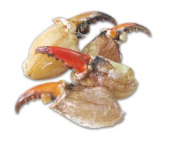 Crab Claw 蟹钳